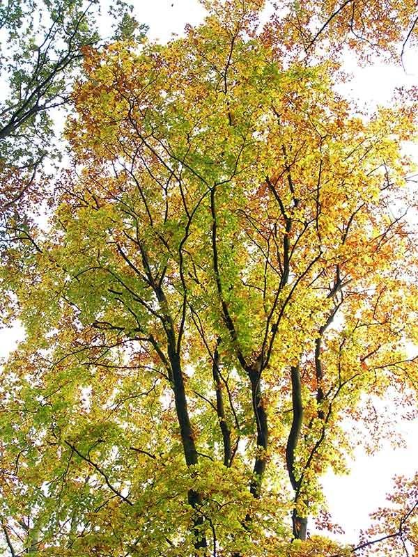 Herbst und Zeit, um Ihre Englischkenntnisse zu verbessern